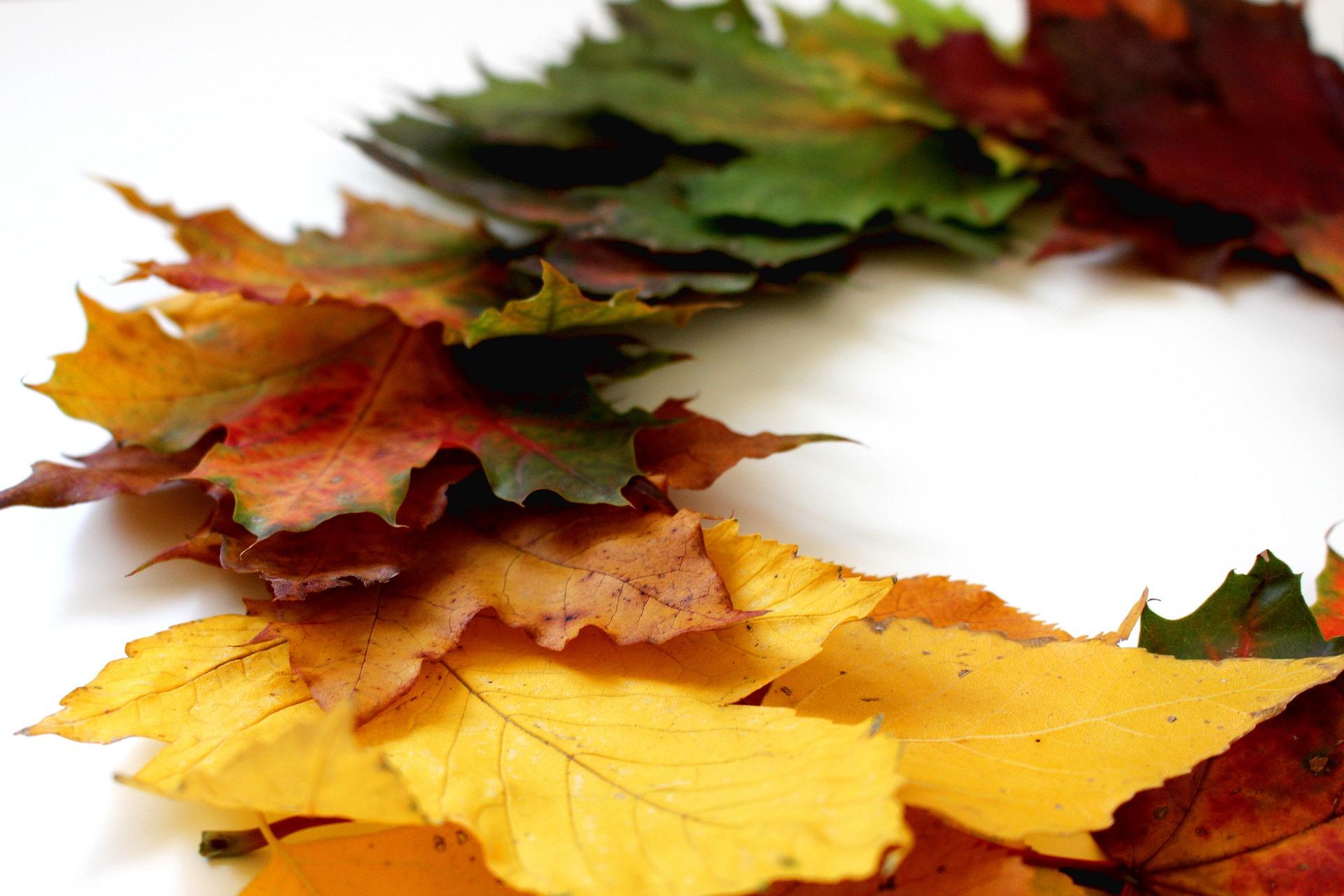 20425-leaves-2854371-1920.jpg