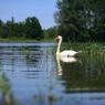 Jezero Katlov a rybník Pohan (2)