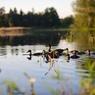 Jezero Katlov a rybník Pohan (3)